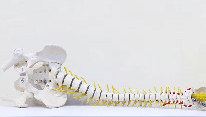 haptonomie fysiotherapie content